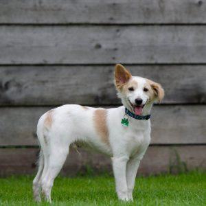 Dauerhafte Hundesteuerbefreiung für Jagdhunde und Hunde aus dem Tierheim